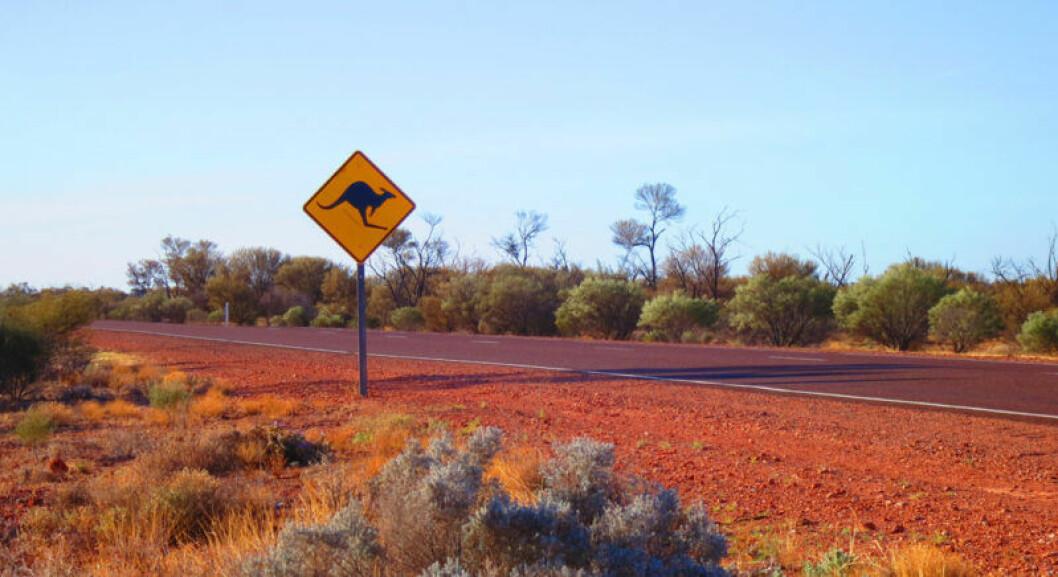 Australiensiska outbacken