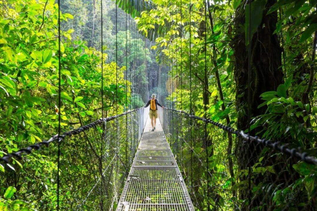Kvinna på hängbro i Costa Rica