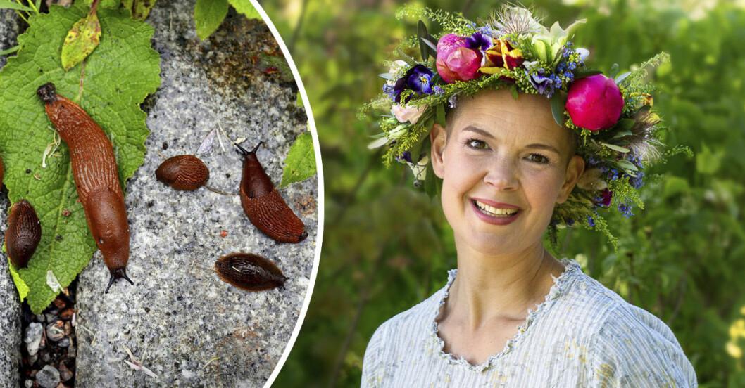 Sara Bäckmo om att få bort mördarsniglar