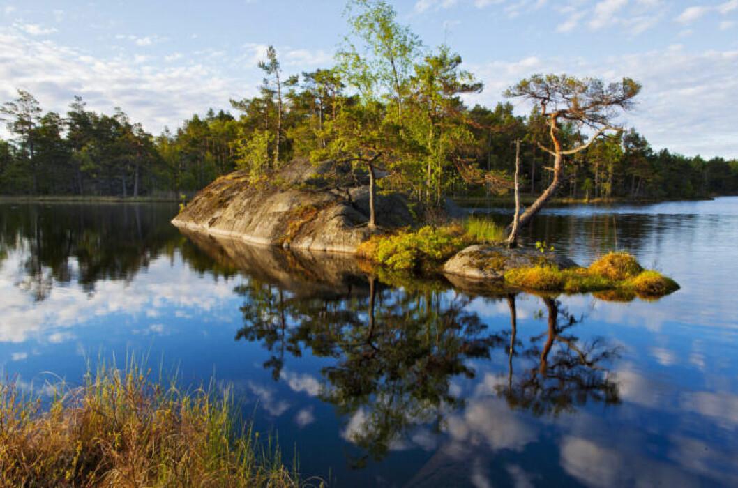Tyresta National Park Outside Stockholm