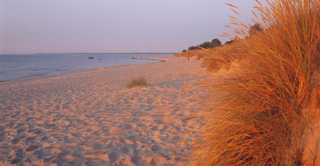 Strand Böda