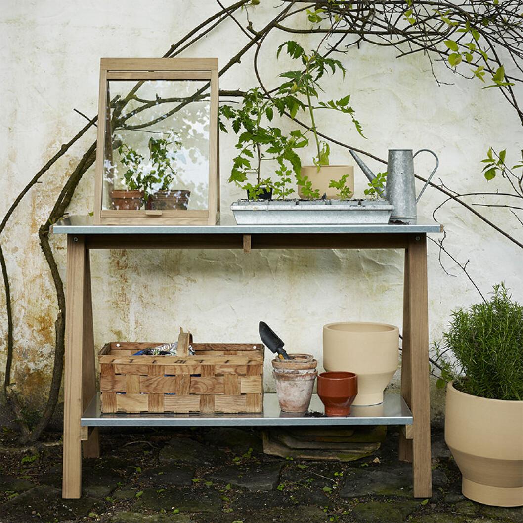 miniväxthus på planteringsbord