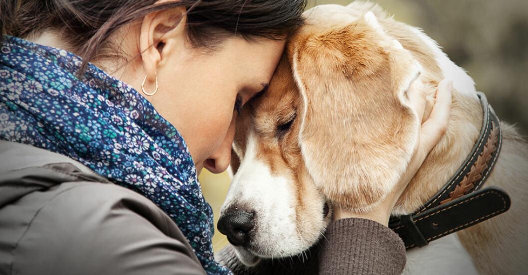 hundar blir stressade av skrik