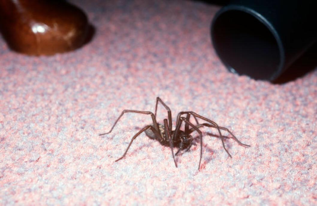 Spindel ett ögonblick innan uppsugning.