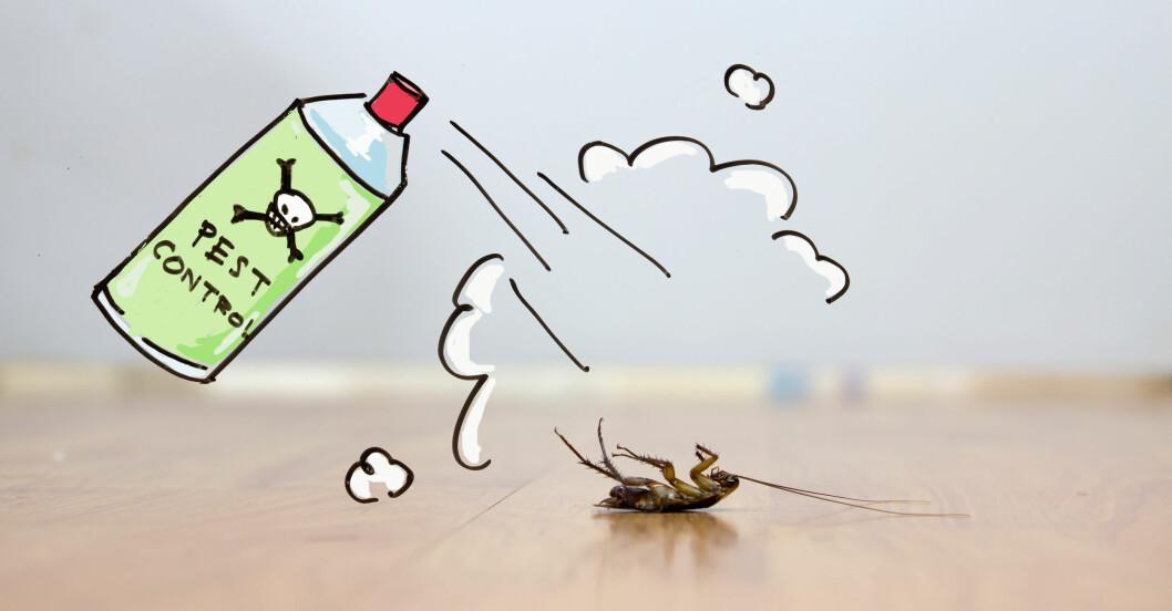 Sprayburk med gift som dödar insekt