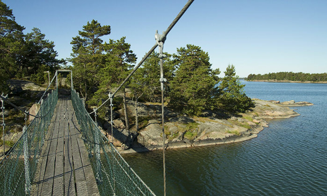 Stendörrens naturreservat – en dagsutflykt från Stockholm