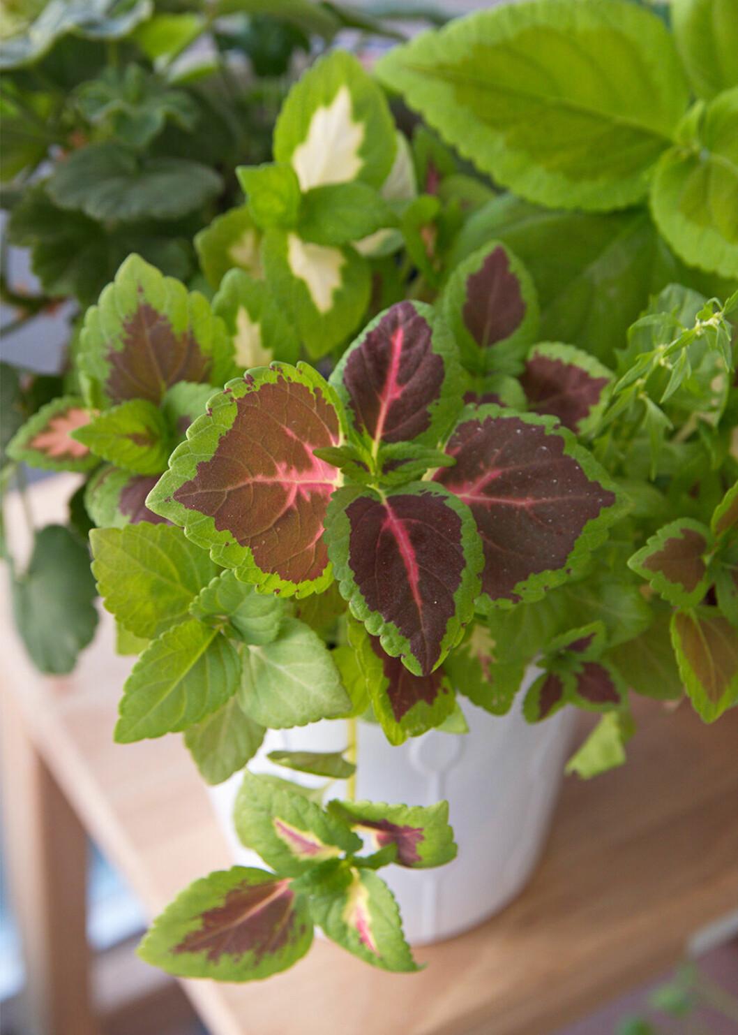Palettblad är populärt bland sticklingar på Tradera