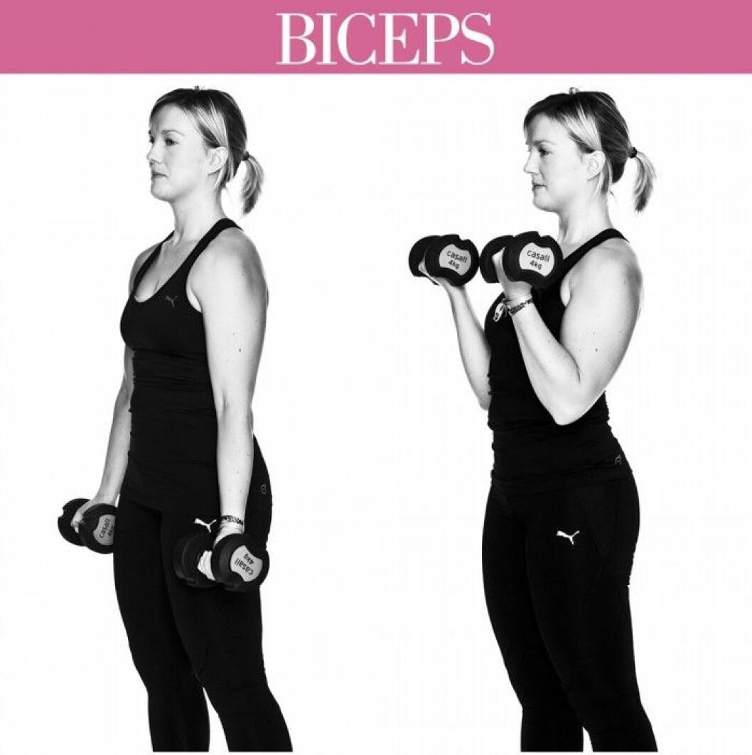 trana-biceps