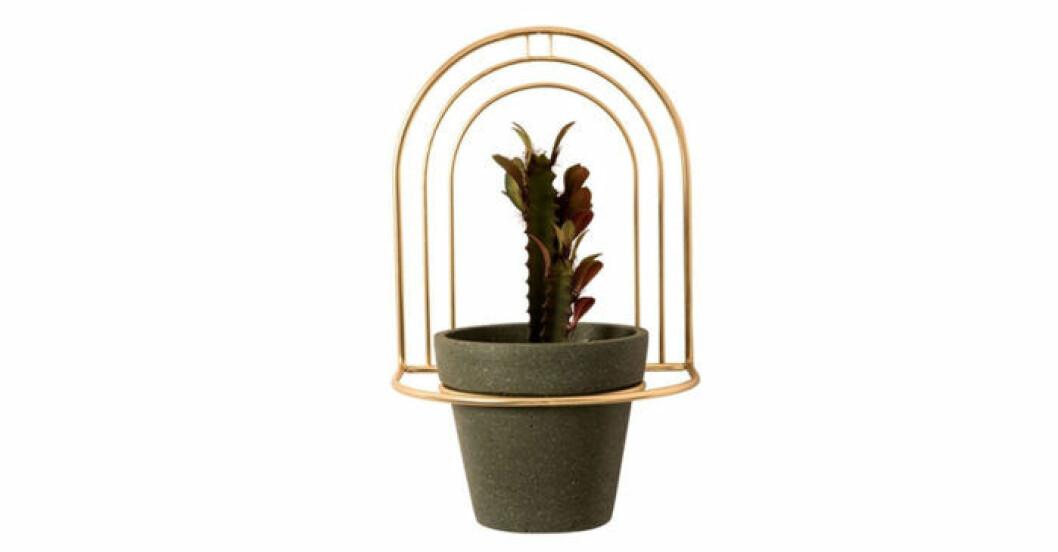 Pryd väggarna med växter i amplar