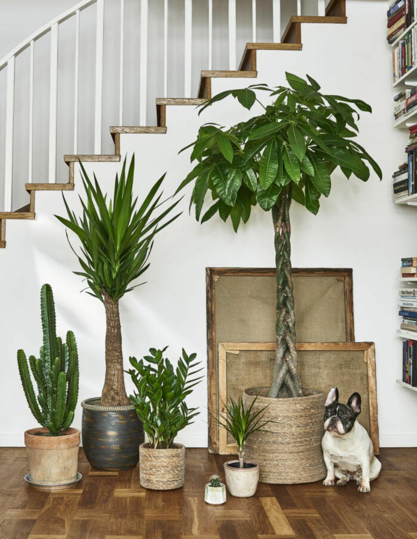 Ta reda på om krukväxten är giftig för katt och hund
