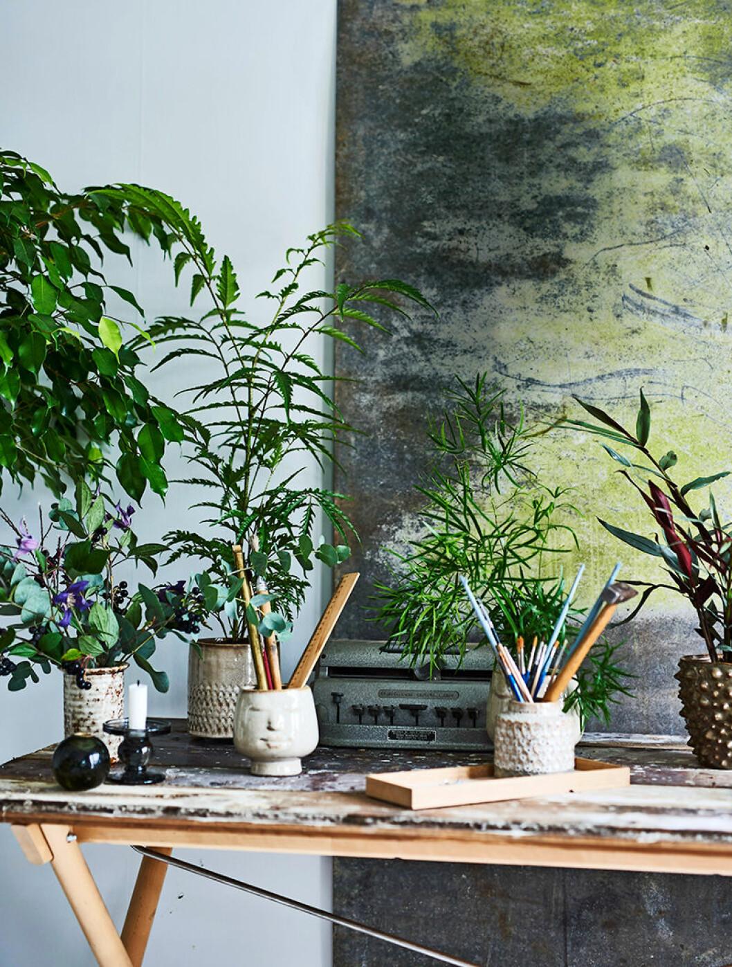 växter som renar inomhusluft