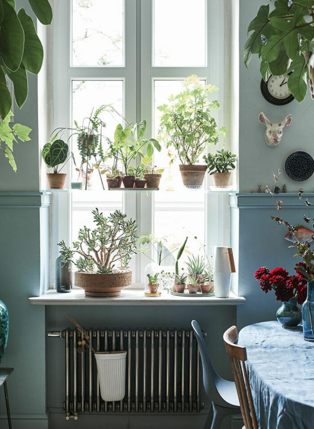 En luftfuktare är ett bra tips för växter