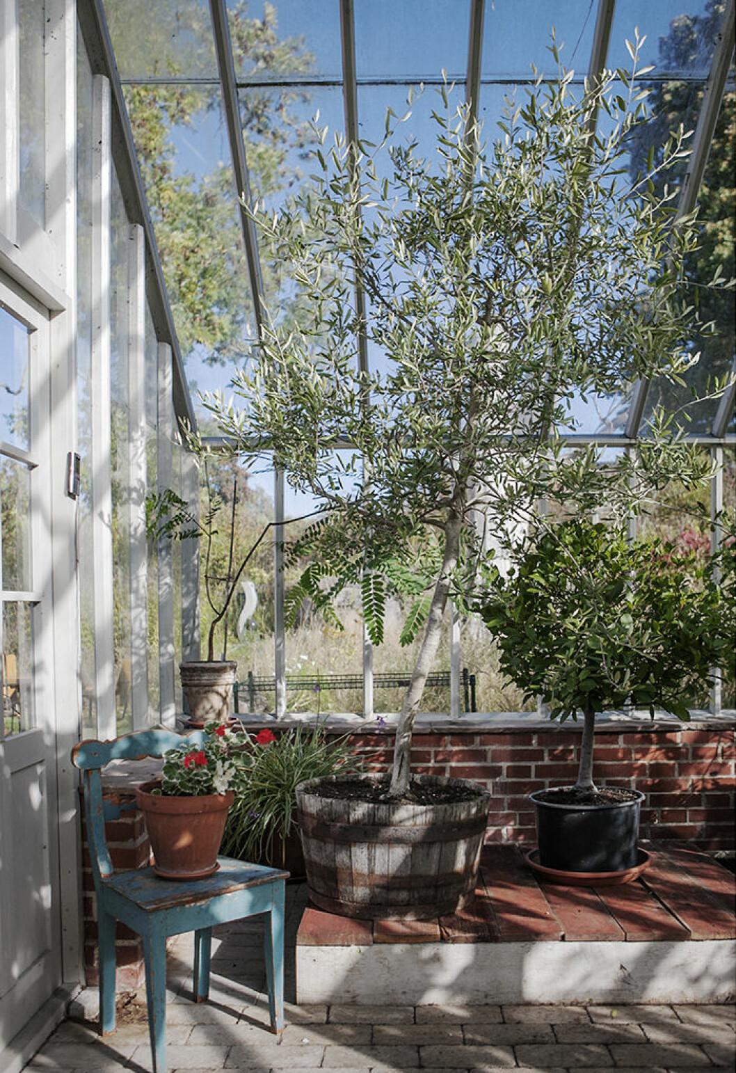 Skapa kontraster i växthuset genom att blanda träd, plantor och krukväxter.
